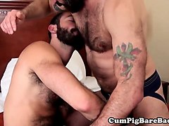 bearded bears bareback and blow in threesome